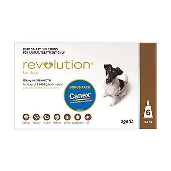 Revolution braun 6-Pack