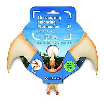 Muzeum historii naturalnej Brainstorm niesamowite równoważenia Pteranodon