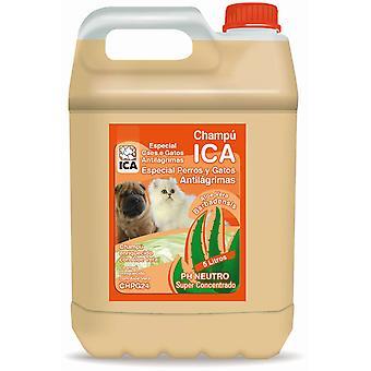 Ica Champú Antilagrimal Lts Aloe Vera (Perros , Higiene y peluquería , Champús)