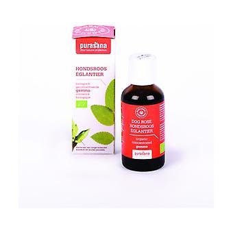 Eglantier 50 ml