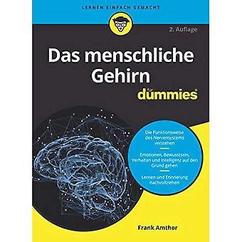 Das Menschliche Gehirn Fr Dummies - Fr Dummies