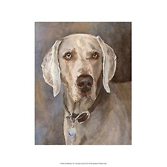 Tate Weimaraner Poster Print by Edie Fagan (13 x 19)