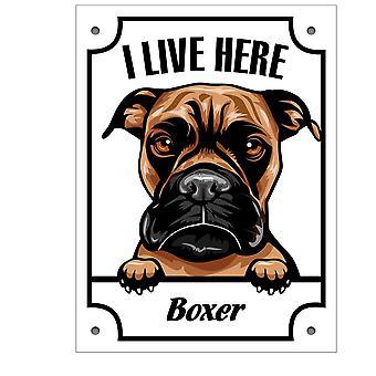 Plåtskyltr Boxer Kikande hund skylt English