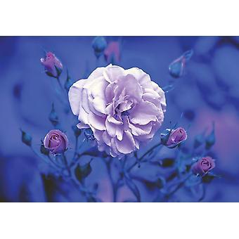 Fondo de pantalla Mural Azul Vintage Rose (12139)