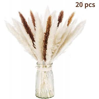 Natürliche getrocknete Bundle von trockenen Pampas Gras für Home Decor 20 Stück (weiß + braun)