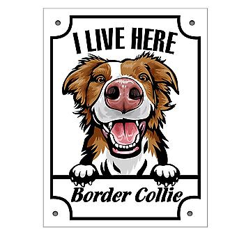 Tin Plate I stay here Brown Border Collie Kikande dog sign