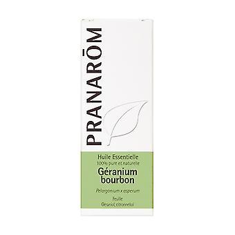Bourbon Geranium essential oil 10 ml of essential oil