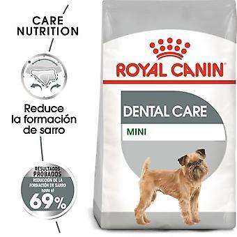 Royal Canin Mini Dental Care (Dogs , Dog Food , Dry Food)