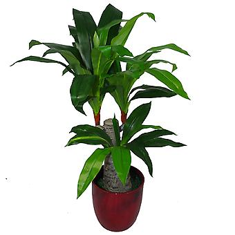 75cm artificiel Dracaena plante - large tronc Triple branche grand
