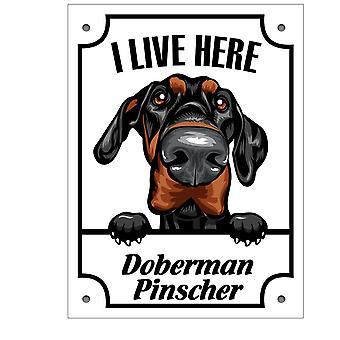 Placa metálica Doberman pinscher Squinting dog sign