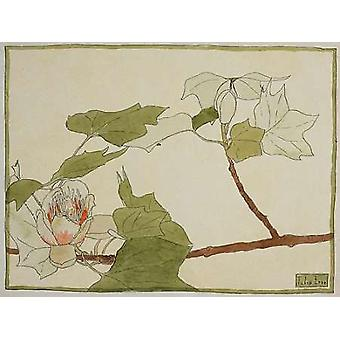 Tulip Tree Poster Print by Hannah Borger Overbeck
