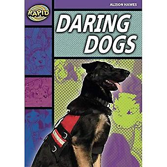 Rapid Stage 1 Set B: Daring Dogs (Series 1) (RAPID SERIES 1)