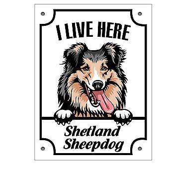 Tin plaat Shetland Sheepdog Kikande hond teken