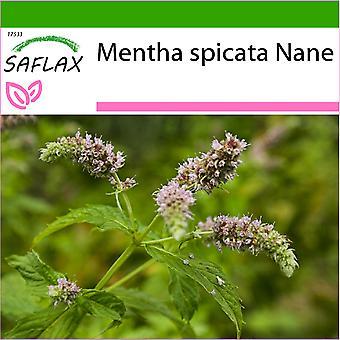 Saflax - 500 frø - Med jord - Meksikansk nana mynte - Menmexicaine nana - Menta spicata Nana - Menta de nana mejicana - Mexikanische Nana Minze