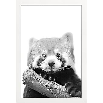 JUNIQE Print - Red Panda - Wildlife Poster in Black & White