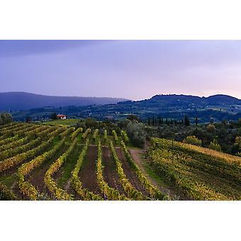 Vin vignes raisin près Ulignano Toscane Italie PosterPrint