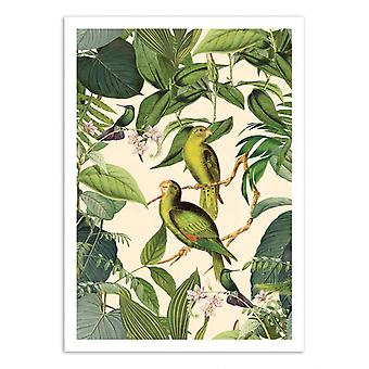 Pôster de Arte - Periquito da Selva - Andrea Haase
