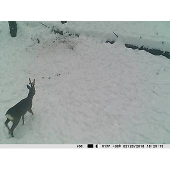 Hunting Camera PNI Hunting 350C 12MP with 3G Internet, SMS, send photo on the move on the phone, email, FTP, full HD 1080P, Night Vision, 58 invisible LEDs for animals