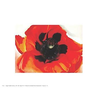 Poppy Poster Print by Georgia OKeeffe (10 x 8)