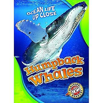 Bultrug walvissen (oceaan leven van dichtbij)
