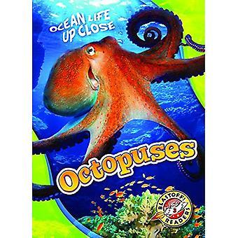 Octopussen (oceaan leven van dichtbij)