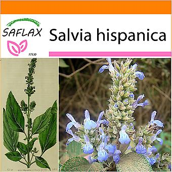 Saflax - Garden in the Bag - 500 seeds -  - Chia - Chia - Chía - Mexikanische Chia