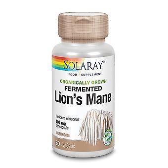 Solaray orgaanisesti kasvanut fermentoitu leijonat Mane sieni Vcaps 60 (18146)