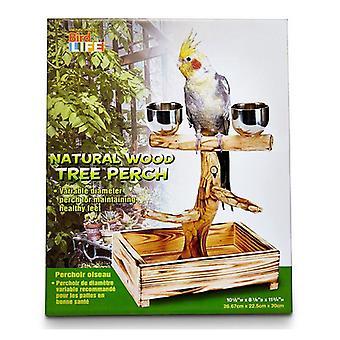 """Penn Plax Bird Life Natural Wood Tree Abborre - 11"""" Hög - (Små & Medelstora Fåglar)"""