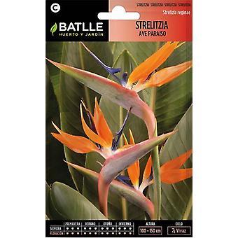 Batlle Bird Of Paradise Strelitzia (Garden , Gardening , Seeds)