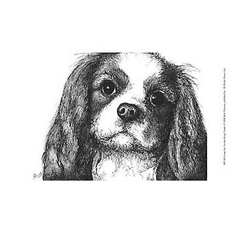 Louie the Cavalier King Charles Poster Print by Beth Thomas (13 x 10)
