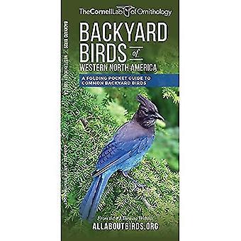 Backyard Birds of Western North America: A Folding Pocket Guide to Common Backyard Birds