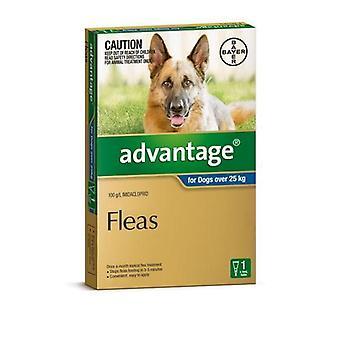Advantage Blue 1 Pack XL Dog 25-50Kg