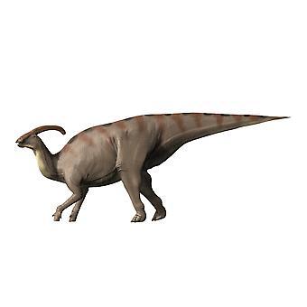 Fond de blanc de dinosaure Parasaurolophus Poster Print