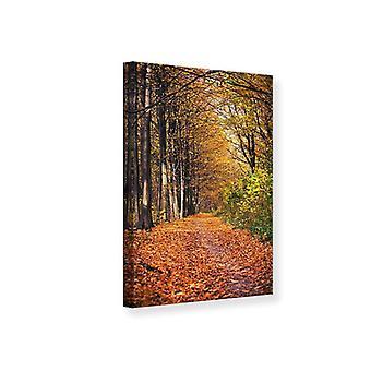 Canvas Print Deciduous Forest In Autumn Light