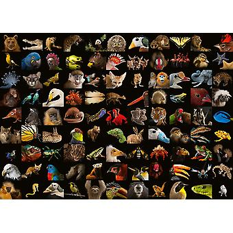 Ravensburger National Geographic - Amazing Animals Legpuzzel (1000 stukjes)