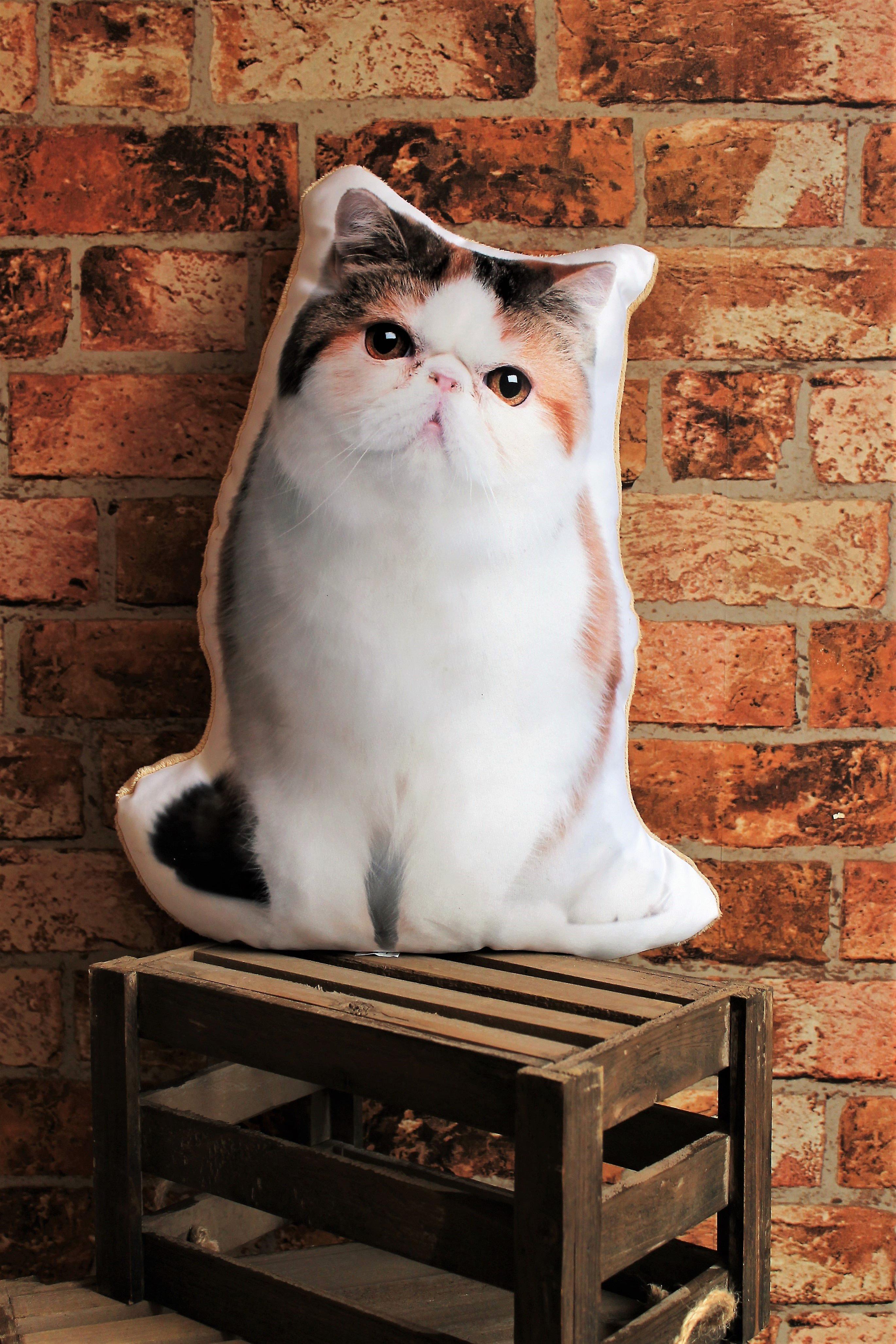 Adorable exotic shorthair cat shaped cushion