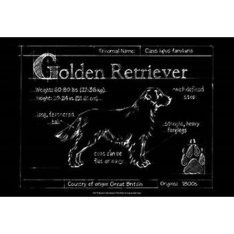 Blueprint Golden Retriever Poster Print by Ethan Harper (19 x 13)