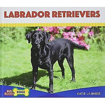 Labrador Retrievers (grote Buddy honden)