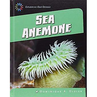 Havsanemon (21st Century färdigheter bibliotek: att utforska våra hav)