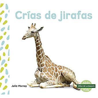 Crias de jirafas (Giraffe Calves) by Julie Murray - 9781644941263 Book