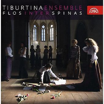 Tiburtina Ensemble - Flos Inter Spinas [CD] USA import