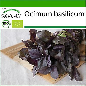 Saflax - 400 sementes - Com solo - Orgânico - Vermelho Manjericão - BIO - Basilic - Pourpre - BIO - Basilico Rosso - Ecológico - Albahaca Roja - BIO - Rotes Basilikum