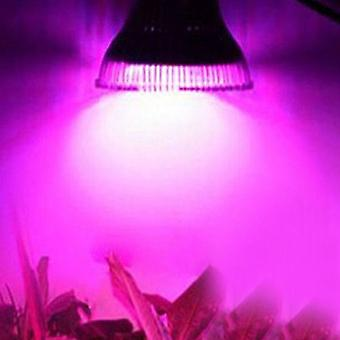 Phyto Led E27 Hydroponic Growth Light