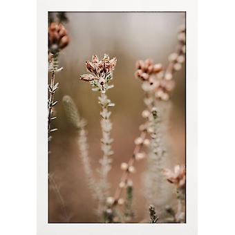 JUNIQE Print - Naturen ude af fokus - Flower Plakat i Brown & Pink
