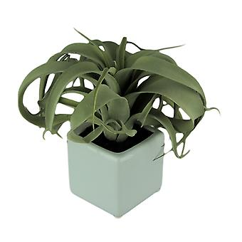 Artificial Air Plant in Decorative Cement Planter 10 inch