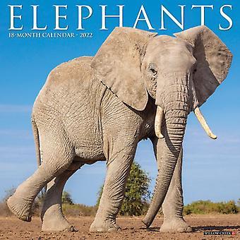 Elephants 2022 Wall Calendar by Willow Creek Press