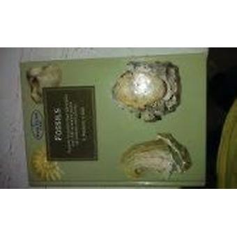 Fossils by Rudolf Prokop - 9781854228291 Book