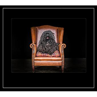 Country Matters Printed Placemat - Bob the Irish Water Spaniel