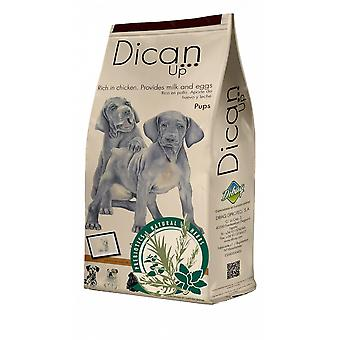 Dican Up Pups  for Puppies (Dogs , Dog Food , Dry Food)