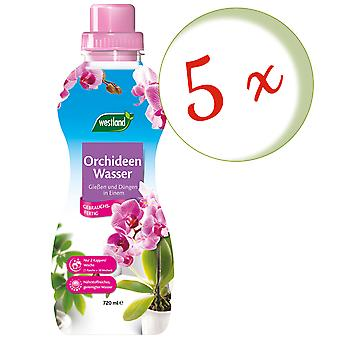 Disperso: 5 x WESTLAND® Orchids Water, 720 ml